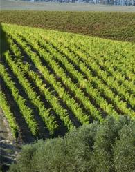 domaine des dieux vineyards on wine farm